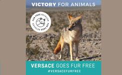 Furla y Versace se vuelven eco friendly, dándole la espalda a las pieles de animales