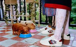 Gucci : une collection dédiée à l'année du cochon